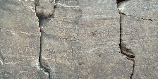 그림 (2) 부분: 호랑이와 표범(왼쪽이 과거, 오른쪽이 현재 사진)