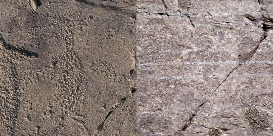 그림 (3) 부분 : 가마우지(왼쪽이 과거, 오른쪽이 현재 사진)