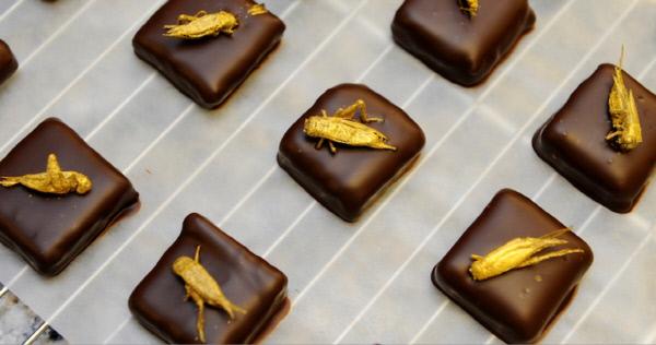 미국의 한 스타트업이 개발한  귀뚜라미 초콜릿.