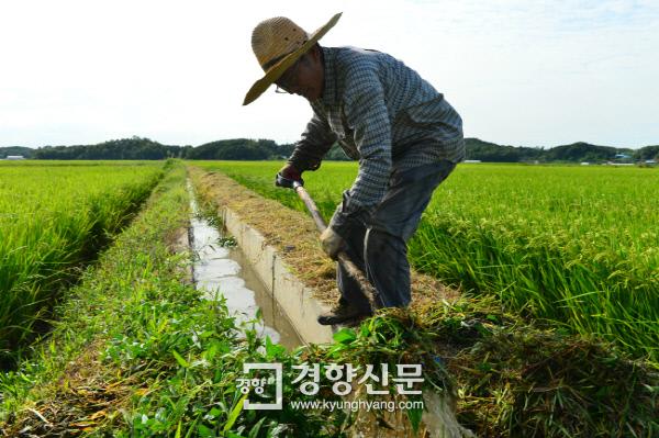 지난 9월 7일 주말을 맞아 충남 당진의 집에 내려간 김영곤씨가 농사일을 하고 있다. /정지윤 기자