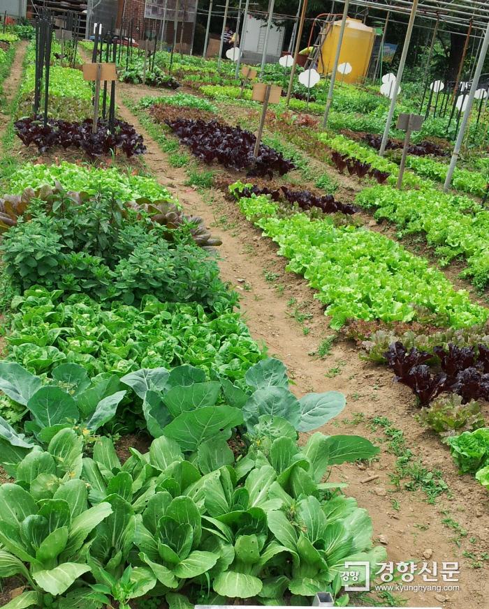 도시민들이 10㎡ 단위로 분양받아 가꾸는 텃밭. 농촌진흥청 제공