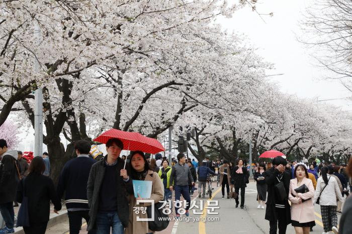 추워도 벚꽃구경