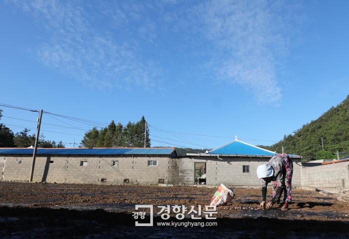 파란 가을하늘 아래 마늘을 심는 농민의 손길이 분주하다. /강윤중 기자