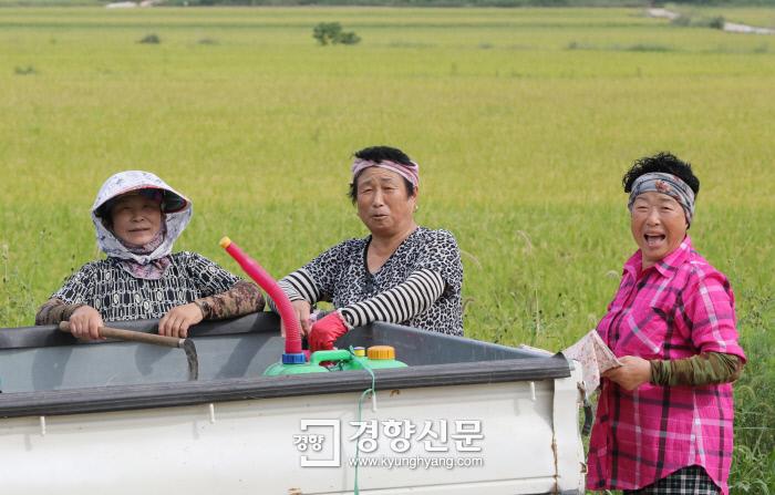 공공근로에 나선 주민들이 휴식을 취하며 웃고 있다. /강윤중 기자