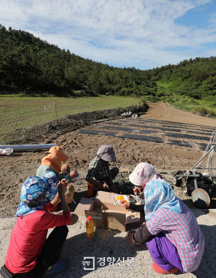 이른 아침부터 이웃집 밭에서 마늘을 심던 주민들이 새참으로 짜장면을 먹고 있다. /강윤중 기자