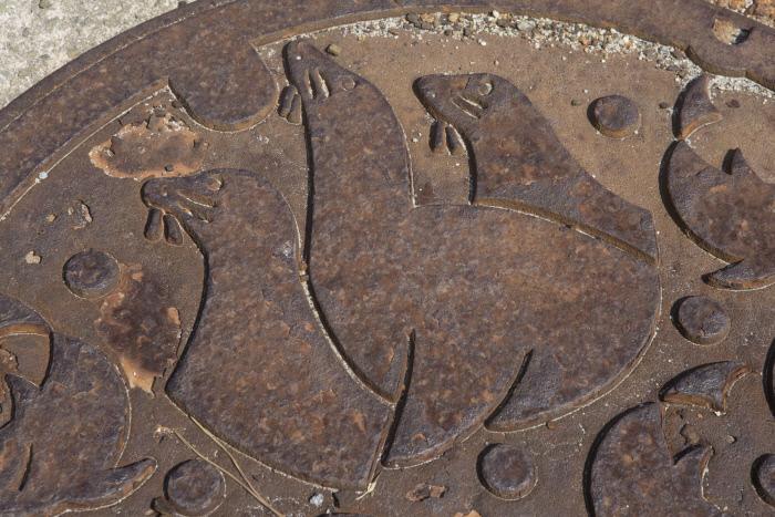 오키섬의 고카이촌은 맨홀 뚜껑에도 강치를 새겨두었다.