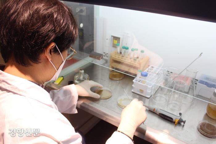 기자가 2월 5일 바이오랩 서울의 클린벤치 앞에 앉아 생물학 실험을 하고 있다. / 바이오랩 서울 제공