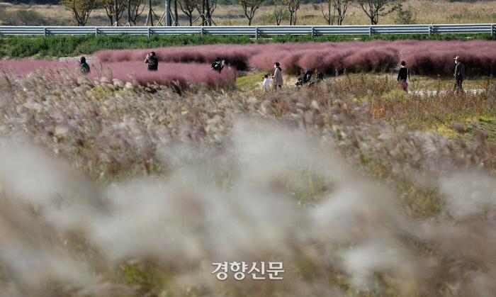 인천 운서동 하늘정원 공원 억새밭 / 김창길 기자