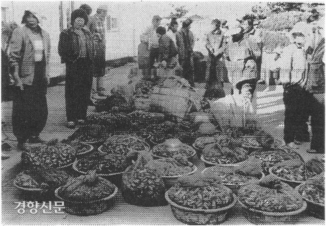 ساکنان دهکده عقب Jugok ، Ujeong-myeon ، Hwaseong-gun ، Gyeonggi-do ، در برابر مسئولیت جبران خسارت با حمل ماهی ها و صدف های مرده یا خراب صید شده در مناطق جزر و مدی در دفتر Hwaseong شرکت مدیریت محیط زیست ، چهارشنبه.  عکس روزنامه کیونگ یانگ