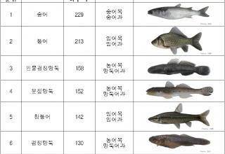 바다와 강이 만나는 '하구'에서 가장 많이 보이는 물고기는?