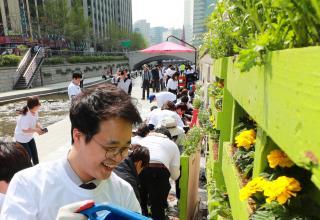 [포토뉴스]청계천 봄꽃 단장