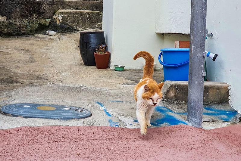 완도 비석거리에서 만난 길 고양이들