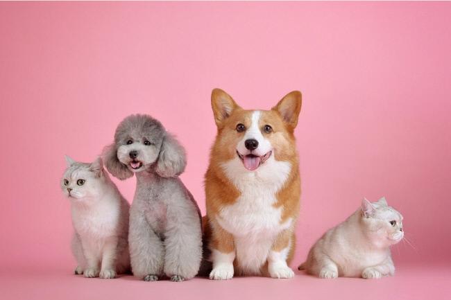 강아지 1살, 인간으로 치면 몇살?··과학자들이 만든 환산기로 돌려 보면 - 경향신문
